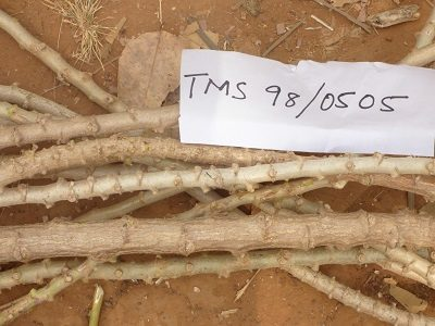 TMS 98 0505 cut stems